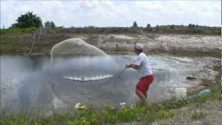 GOLDEN SHINER GOLD MINE - THROWING A BIG CAST NET FOR LIVE FISHING BAIT - HD