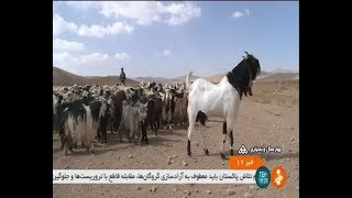 Iran Pet & Animals حيوانات خانگي و اهلي ايران