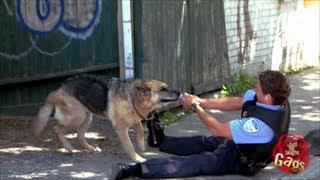 الكاميرا الخفية: : كلب بوليسي يعصي الأوامر