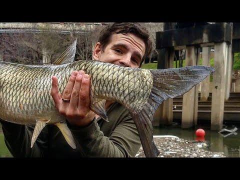 BIG City Fish