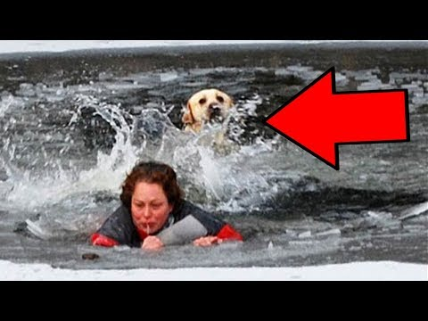 Top 10 Times ANIMALS Saved HUMANS LIVES