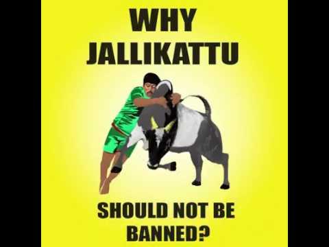 Why JALLIKATTU should not ban in India(Tamil Nadu) reason•.•~~~WATSAPP
