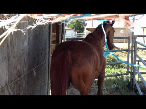 Xxx Mp4 Helping A Horse To Push Past Fear Making The Right Answer Easy Rick Gore Horsemanship 3gp Sex