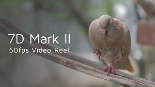 7D Mark II 60fps Video Reel