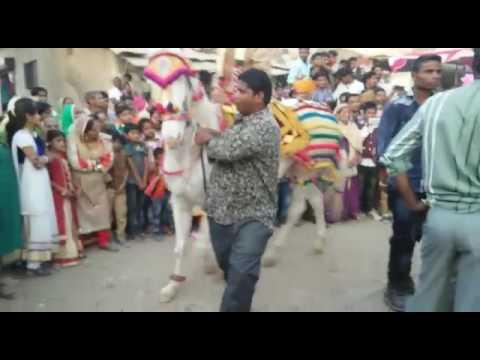 Xxx Mp4 Hasanpura Baloch Salimkhan9925473979 Bhai 3gp Sex