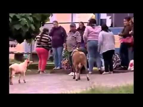 Xxx Orang vs kambing