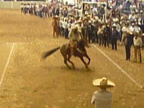 Cala de caballo de Don Vicente Fernandez