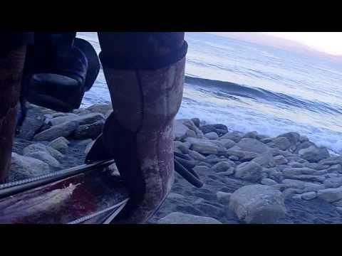 Pesca Sub: Seppia del 2 Marzo