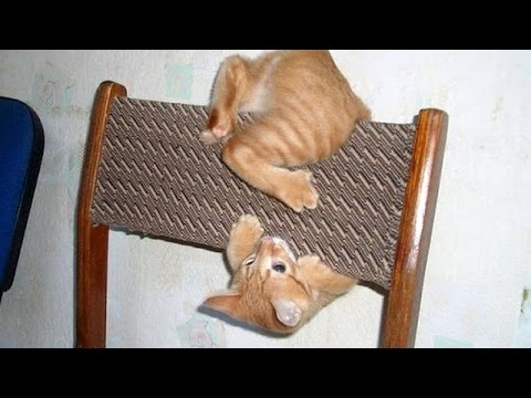 THESE CAT CLIPS WILL STAY IN YOUR MEMORY Ultimate FUNNY and CUTE CAT VIDEOS Watch and enjoy