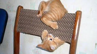 THESE CAT CLIPS WILL STAY IN YOUR MEMORY - Ultimate FUNNY and CUTE CAT VIDEOS - Watch and enjoy