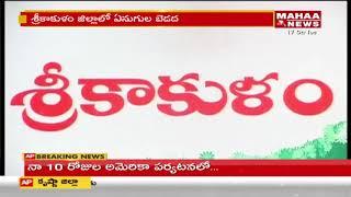 Elephants Damage Crops In Srikakulam District   Mahaa News