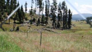 Mining claim and 148 acres in Elk City, ID