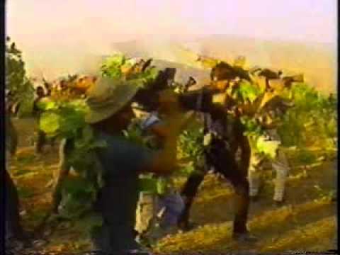 Los Torogoces de Morazan La Batalla de San Felipe
