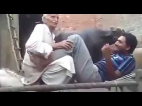 Funny old man teaching sex