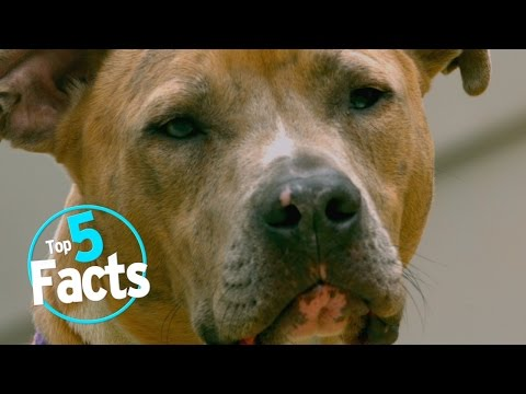 Top 5 Facts About Dogs