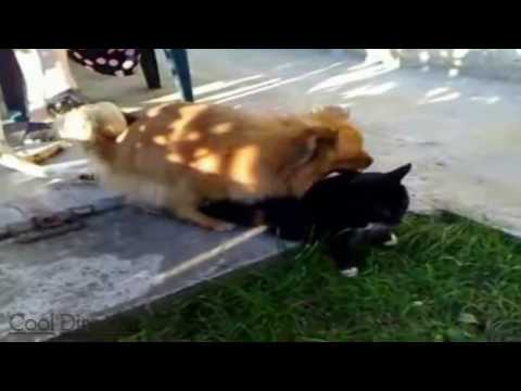 Xxx Mp4 Dog Having Sex With Cat 4 3gp Sex