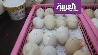 #صباح_العربية: تناول قشر البيض لعظام قوية