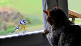Weird cats making terrifying sounds while talking to birds - Funny cat compilation
