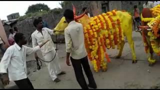 Cow attacks pakistani people. Idiot Pakistan