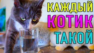 КАЖДЫЙ КОТИК ТАКОЙ   ПАРОДИЯ Magic Pets