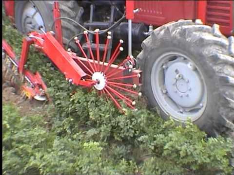 Weremczuk ALINA ECO kombajn do zbioru warzyw korzeniowych carrot harvester