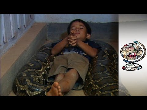 Xxx Mp4 The Cambodian Boy Who Sleeps With A Python 3gp Sex