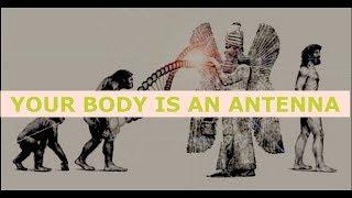 Gerald Clark, Anunnaki Made Humans As Biological Robots, But, Who Made Them?