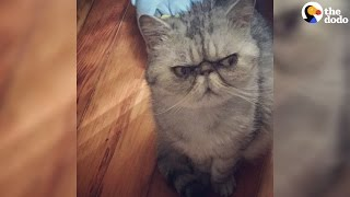 This Cat Looks Evil, But She Just Wants To Snuggle