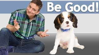 How to Teach your Dog to Be Good around ANYTHING! *NEW*