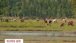 বাংলাদেশের সবচেয়ে সুন্দর একটি গ্রাম।।  Beautiful Village of Bangladesh