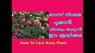 റോസ് നടീൽ /പരിപാലന രീതികൾ Rose Plant care tips at home