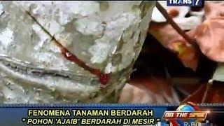 On The Spot - Fenomena Tanaman Berdarah