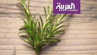 صباح العربية: اكليل الجبل ينشط الذاكرة