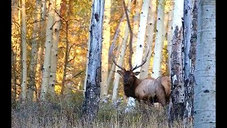 LAST CHANCE BULL ELK | DAD'S MUZZLELOADER ELK HUNT PART 4