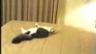 Funny cat crash