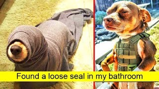 Hilarious Dog Snapchats That Are Impawsible Not To Laugh At 「 funny photos 」