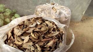 Easy Way to Make Leaf Compost At Home / पत्तियों का खाद / Gardening Video In Hindi // Mammal Bonsai