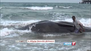Hit by ship, dead Whale washes ashore in Cuddalore