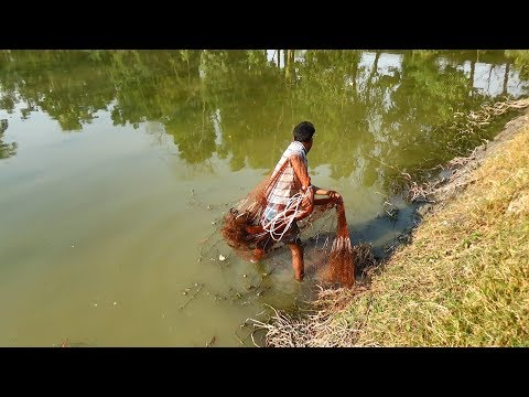 Net Fishing Catching Fish With Cast Net Net Fishing in the village Part 116