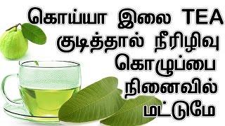 கொய்யா இலை TEA  குடித்தால் நீரிழிவு கொழுப்பை குறைக்கும் | Health Benifits of Guava Leafs In Tamil