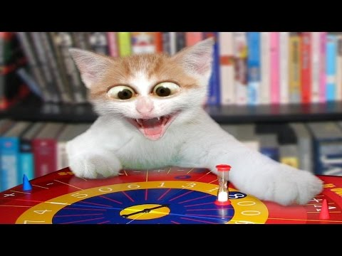 Vídeos engraçados de gatos tomando susto gatos brincando gato divertido