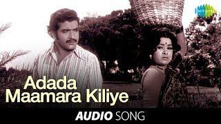 Chittu Kuruvi | Adada Maamara Kiliye song