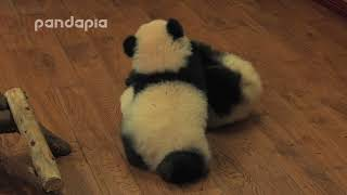 Panda Cheese and Sesame's fight
