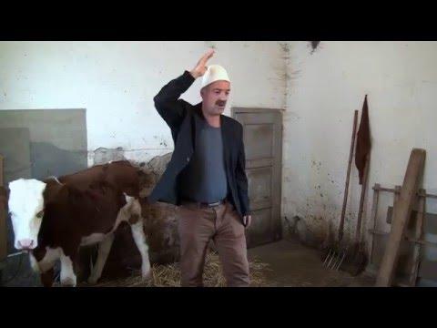 Baskia 2016  - 3 GJI  A 4 GJI  /Humor/