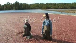 A Cranberry Harvest