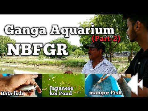 Xxx Mp4 Ganga Aquarioum Part 2 3gp Sex
