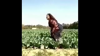 س.ک.س در مزرعه - هندی