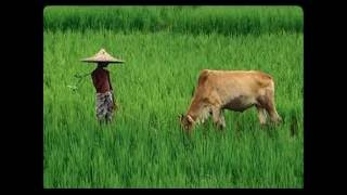 Natural Beauty Of Bangladesh With Nice Song (Dont Miss It)