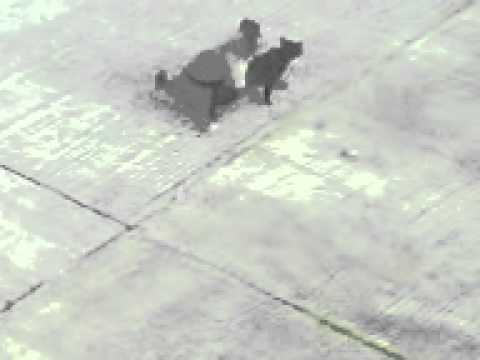 Xxx Mp4 Male Dog Having Sex With A Male Cat 3gp Sex