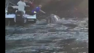 Moment That Desperate Whale Approached Boat Full Of Fishermen For Help After Getting A Plastic...